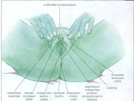 vo-vlagalishe-kremoobraznie