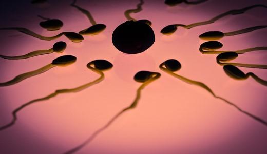 Что происходит на 3 недели беременности от зачатия