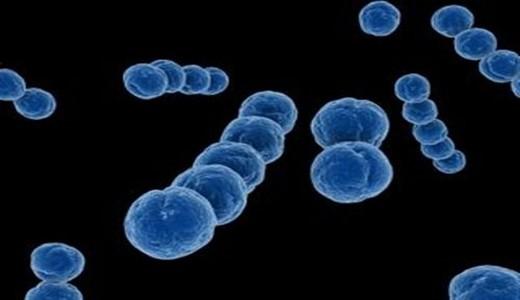 Стрептококковая инфекция в гинекологии при беременности