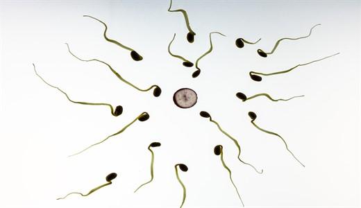 Врут ли тесты на беременность