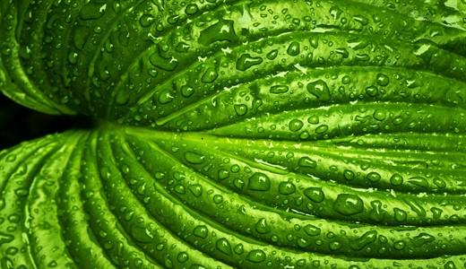 Зеленые выделения при беременности