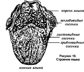 определить запах ацетона изо рта