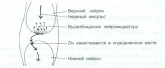 Открытие механизмов акупунктуры