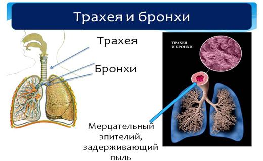 Защитные барьеры организма