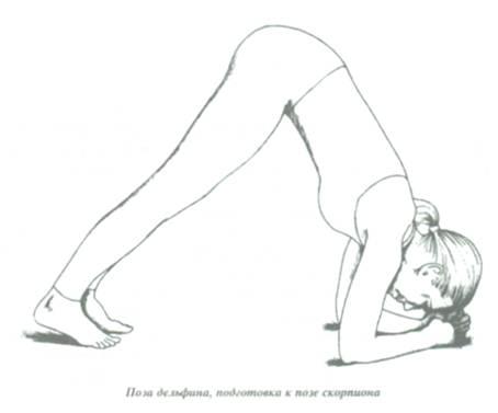 поза дельфина в динамике йога можно