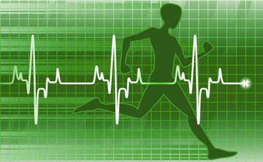частота биения сердца во время тренировок