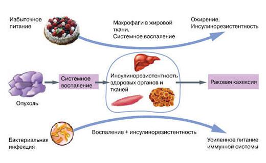 инсулин и рак