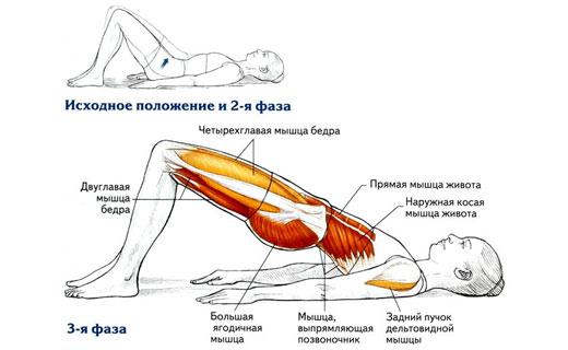 йога и мышцы живота