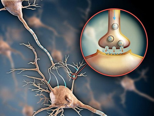 Серотонин в организме человека