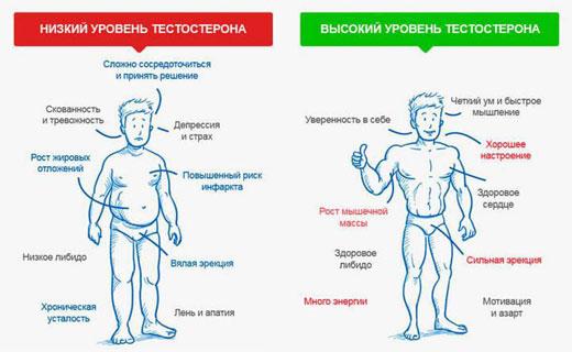 влияние тестостерона