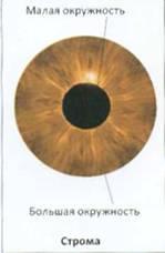 Особенности строения глаза