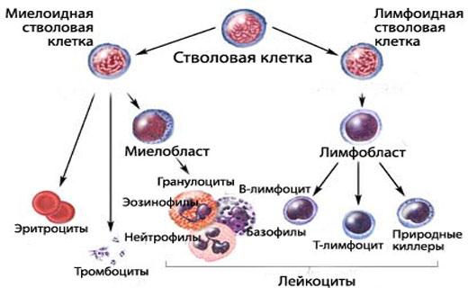 Диагностика по крови