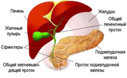 Дискинезия желчевыводящих путей