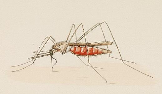 Лечение малярии народными средствами