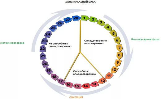 месячный цикл