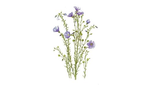 Семена льна применение для лечения