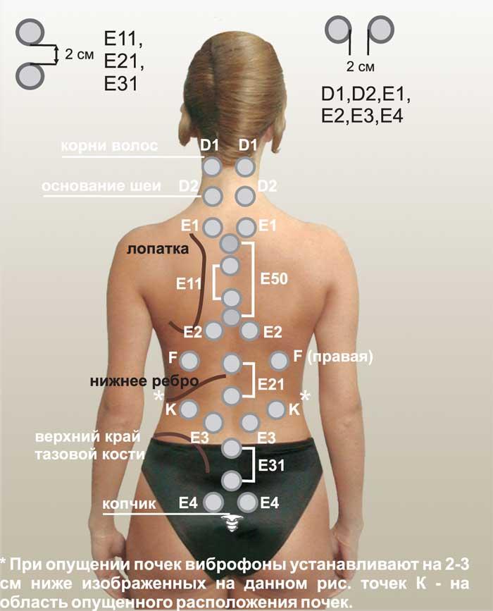 Витафон на задней части тела