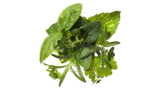 травы для желудка и кишечника