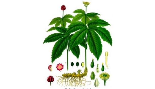 Диспепсия лечение травами