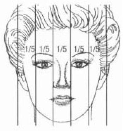 Лицо разделено на пять равных