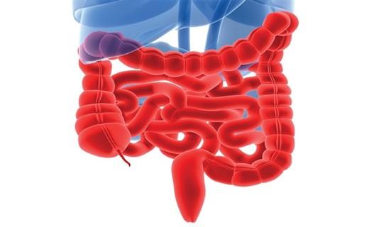 Энтероколит кишечника
