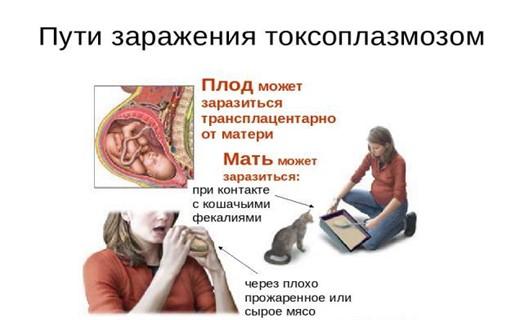 Тест на токсоплазмоз у беременных 76