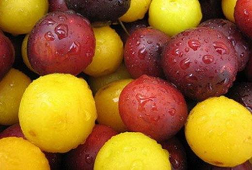 Плоды алычи