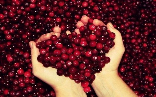 Использование ягод брусники