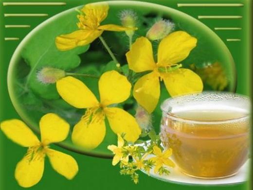 Лечение чаем из чистотела