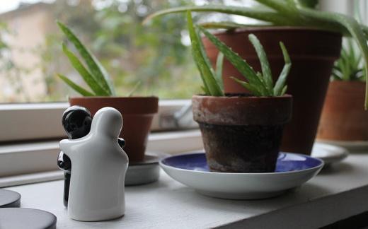 Лекарство из алоэ в домашних условиях - как приготовить?