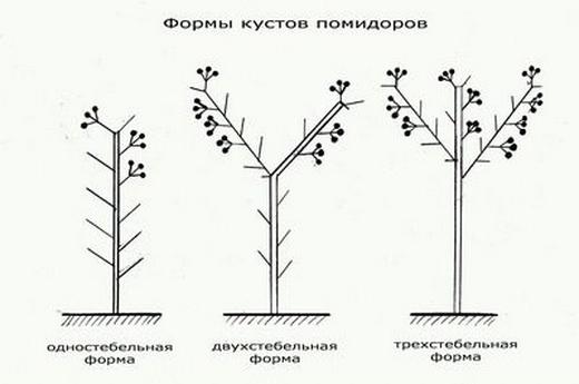 Методы формирования помидоров
