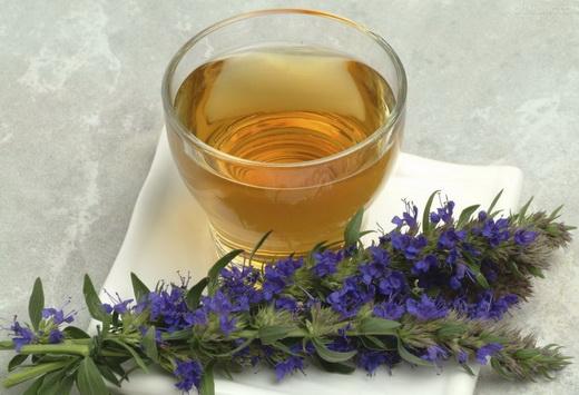 Свойства чая из иссопа