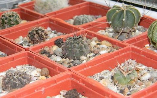 Земля для выращивания кактуса