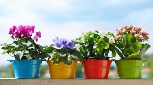 Цветущие и здоровые растения