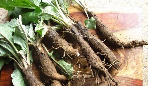 Свойства корней лопуха