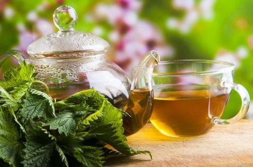 Свойства чая из крапивы