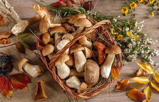 Лечебные свойства различных грибов