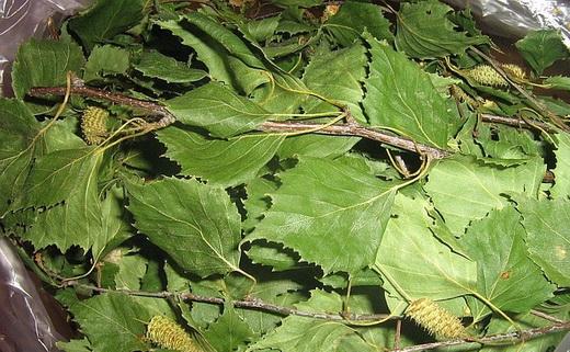 Сушеный лист березы