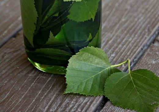 Настой листьев березы