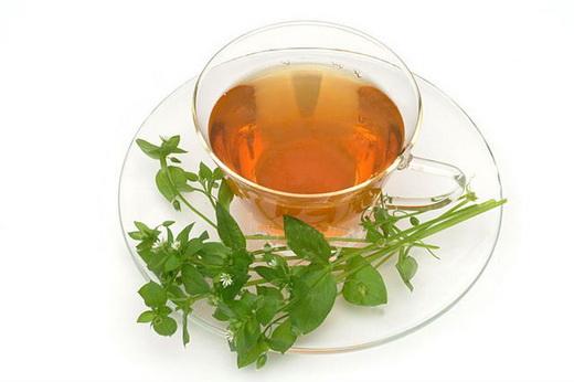 Свойства чая из мокрицы