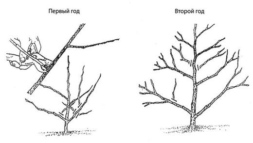 Гортензия обрезка осенью