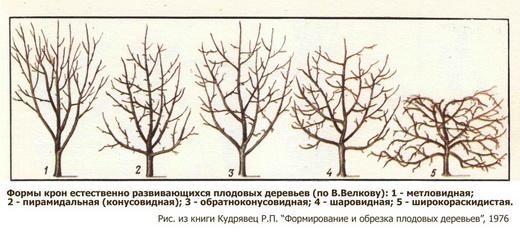 Обрезка фруктовых деревьев осенью видео