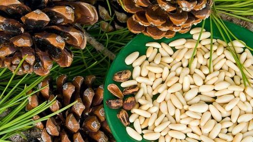 Ядра кедрового ореха