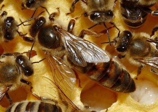 Кормление пчел с рамки
