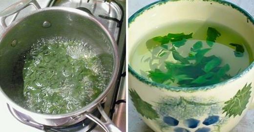 Отвар зелени петрушки