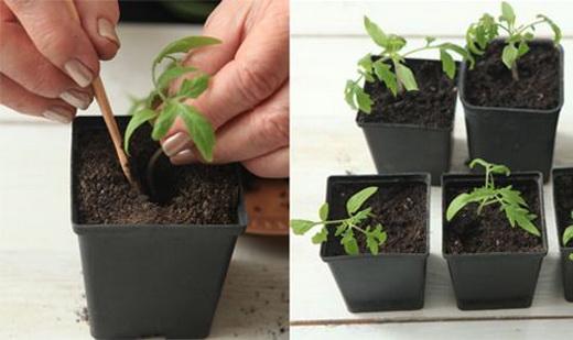 Как подкормить рассаду в домашних условиях
