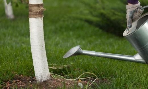 Увлажнение почвы перед подкормкой