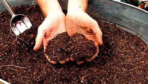 Органические удобрения для подкормки чеснока