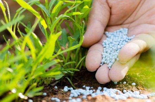 Подкормка корней минеральными удобрениями