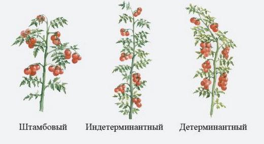 Методы подвязывания помидоров
